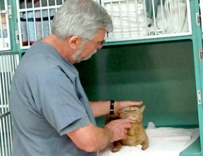 309437-cat-medical-treatment